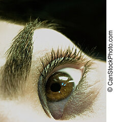 Big Brown Eye