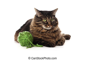 Big brown Maine Coon cat playing with green yarn, isolated on white