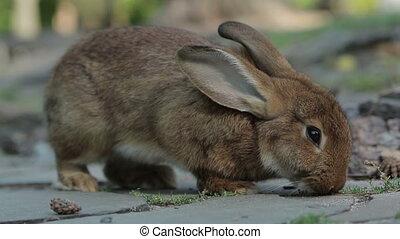 Big Brown Rabbit Feeds