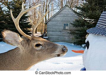 big buck and snowman