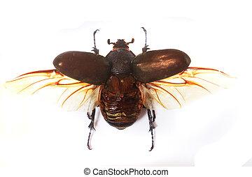 big bug isolated