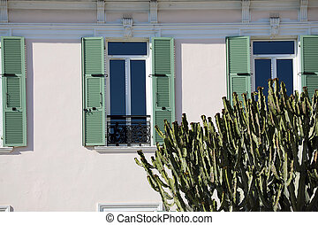 Big Cactus in Front of a House
