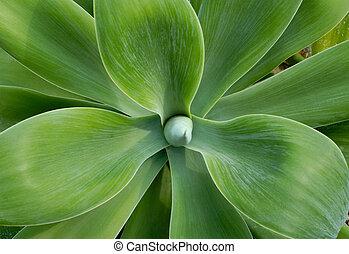 Big cactus leaves close-up
