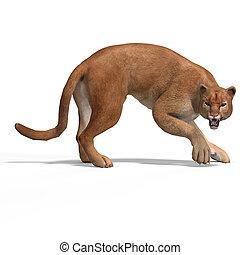 Big Cat Puma - Dangerous Big Cat Puma With Clipping Path...