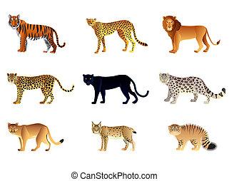 Big cats vector set - Popular big cats high detailed vector ...