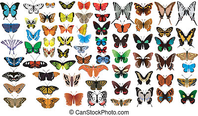 big collection of butterflies - big vector collection of...