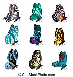 Big collection of colorful butterflies. Butterflies isolated on white. Vector