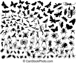 vector insects - Big collection of different vector insects...