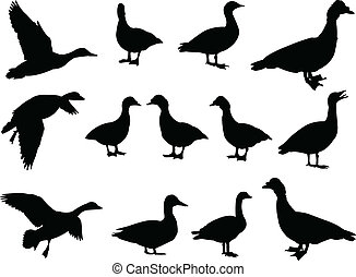 big collection of duck - vector - illustration of duck...