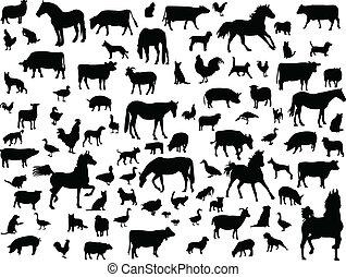farm animals - Big collection of farm animals - vector