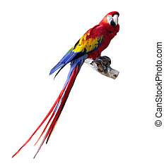 Parrot -  Big Colorful Macaw Parrot Isolated On White