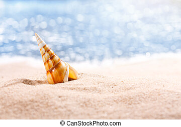 Big colorful seashell on a tropical yellow sand beach against a blue sea background. Place for text, close up.