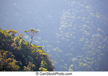 Big crooked tree on the edge of a steep mountain slope -...