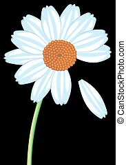 daisy isolated on the black background