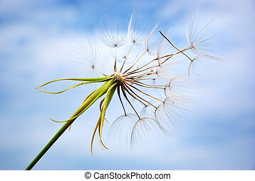 Big dandelion in sky. Nature composition.