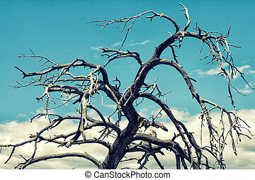 big Dead tree branch against blue sky with clouds.