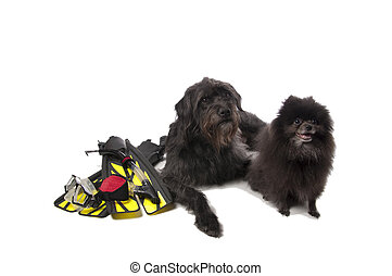 Big dog and little dog with scuba gear