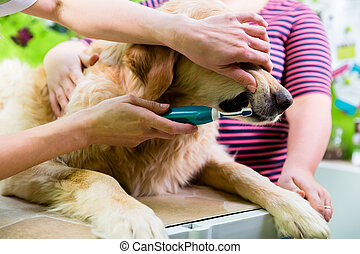Big dog getting dental care by woman at dog parlor