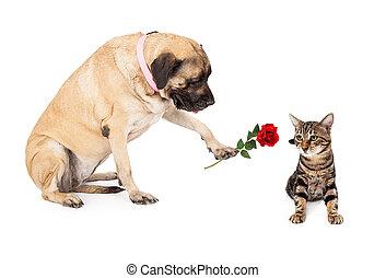 Big Dog Handing Rose to Cat