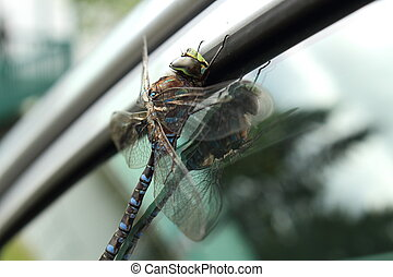 Big dragonfly on a glass