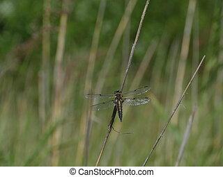 big dragonfly sitting on a branch