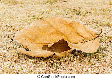 Big dry brown leaves on the grass