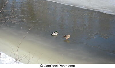 big duck ice river rest - beautiful couple male and female...