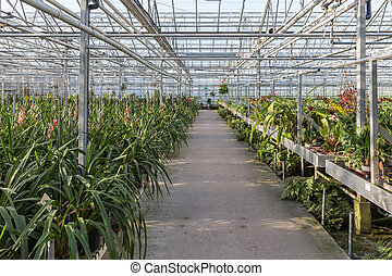 Dutch greenhouse with an orchid nursery