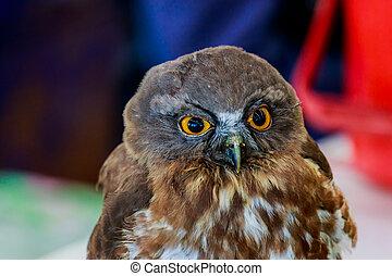 Big eagle owl bird head in closeup