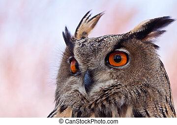 Big eagle owl in closeup