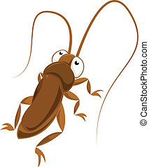 Big-eyed cockroach