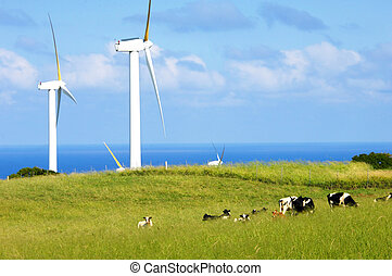 Big Fans - Wind farm combines with dairy farm on the Big...