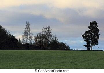 field in spring