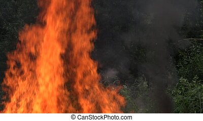 Big fire flame make damage to forest fauna and flora after...