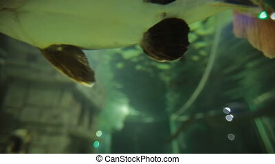 Big fish at aquarium - Big fish swiming at aquarium