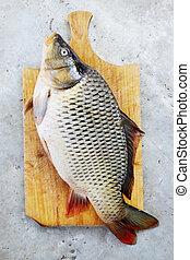fish - carp