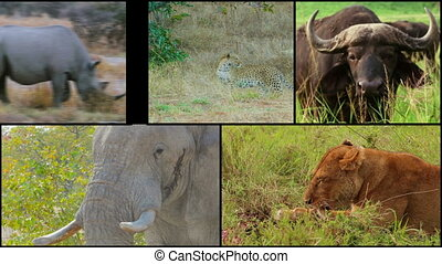 african big five wild animals collage montage composite buffalo lion leopard elephant rhino