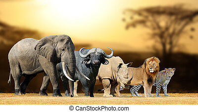 Big five game - Big five africa - Lion, Elephant, Leopard, ...