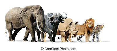 Big five game isolated on white - Lion, Elephant, Leopard, ...