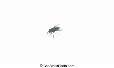 Big fly horsefly crawls on the glass. Tabanidae. Big fly...
