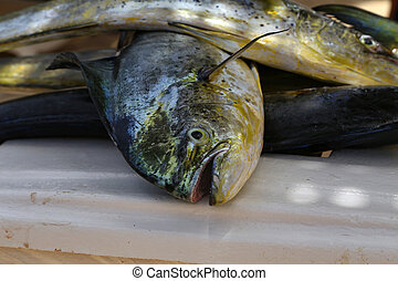 Big fresh fish caught by fishermen in the sea