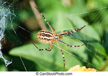 big frightening spider on cobweb in forest