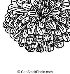 Big furry autumn flower