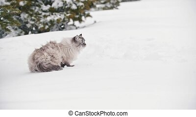 Big furry cat walking in the snow near the trees, pet care