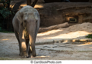 Big, gray animal standing in front of trees - A big, gray...
