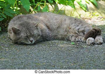 gray cat lies and sleeps on the pavement