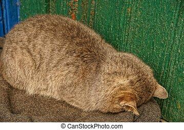 big gray cat sleeping near the green wall