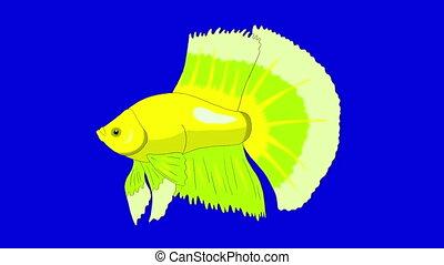 Big Green Aquarium cockerel fish Chroma Key looped - Big...