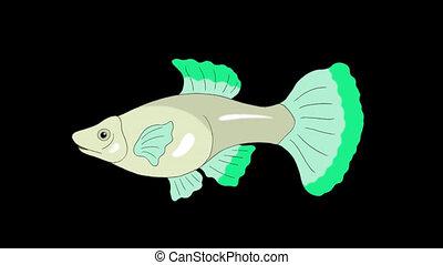 Big Green Guppy Aquarium Fish Alpha Matte looped - Big Green...