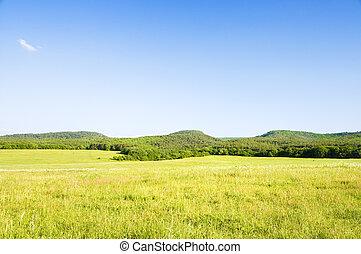 Big green mountain meadow.